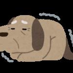震えている老犬のイラスト