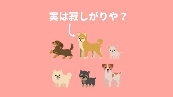 柴犬は寂しがりやのアイキャッチ画像