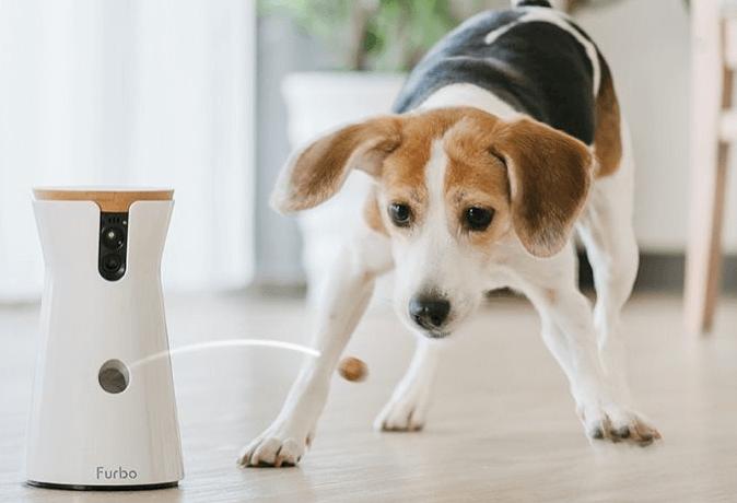 ファーボで遊ぶ犬