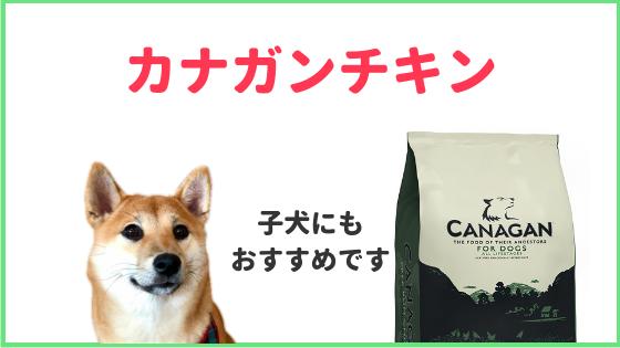 「カナガンチキンは柴犬の子犬に最適」のアイキャッチ画像