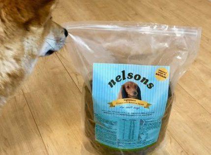 ネルソンズドッグフードと柴犬