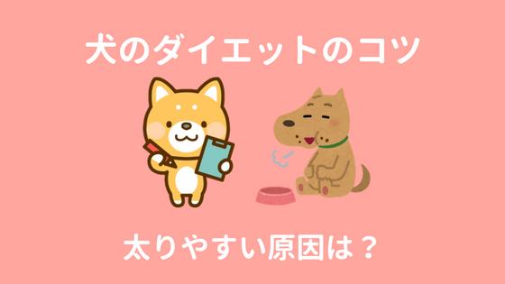 犬のダイエットのコツのアイキャッチ画像