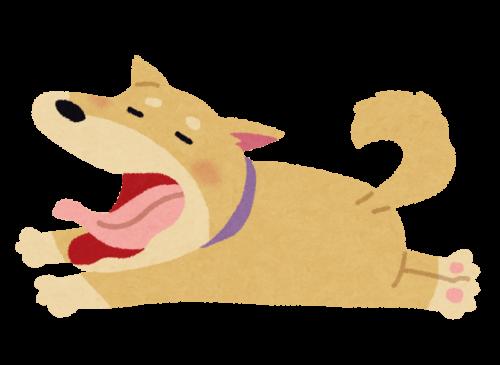あくびをしている肥満犬