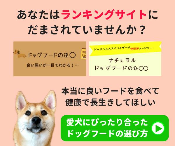 愛犬に合わせたドッグフードの選び方