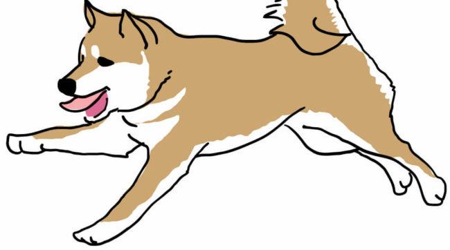 興奮して走り回る柴犬のイラスト
