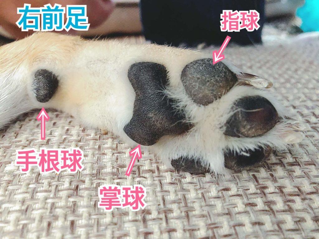 犬の肉球の説明