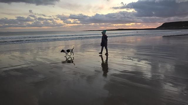 浜辺で犬を散歩させる少年