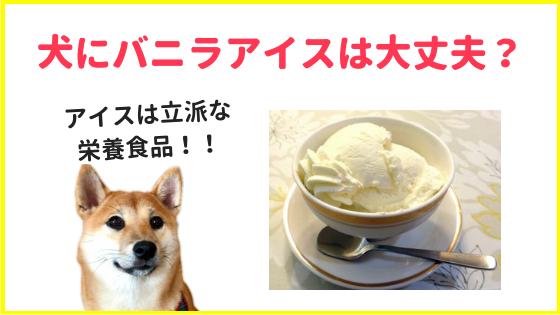 犬にバニラアイスは大丈夫?のアイキャッチ画像
