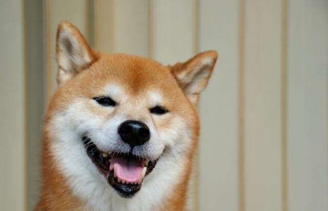 にっこりする柴犬