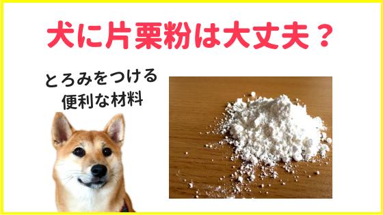 犬に片栗粉を食べさせて大丈夫のアイキャッチ画像