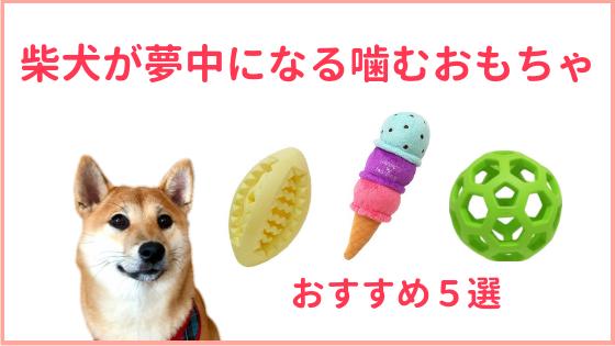 柴犬の噛むおもちゃのアイキャッチ画像