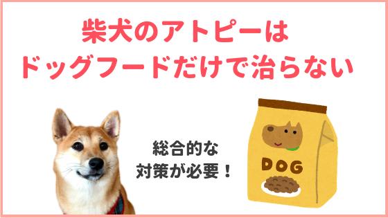 柴犬のアトピーのアイキャッチ画像