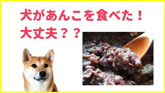 犬があんこを食べても大丈夫?のアイキャッチ画像