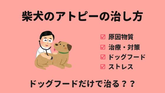柴犬のアトピーの治し方