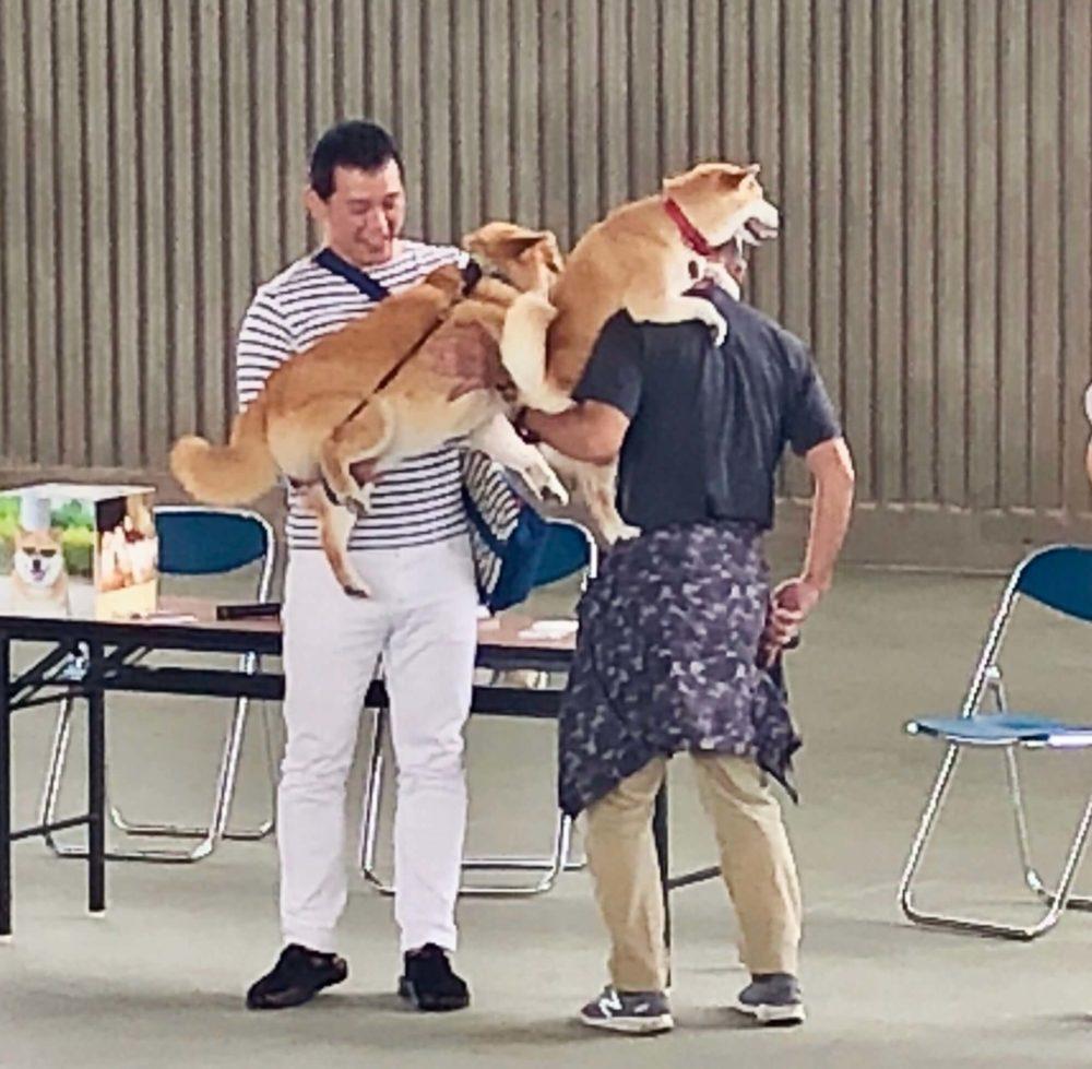 ステージ上で抱っこをされる柴犬まる
