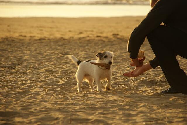 砂浜で遊ぶ犬と青年