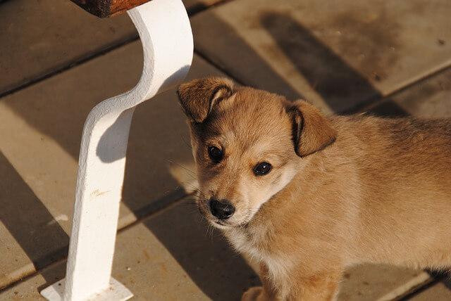 こちらを見上げる子犬