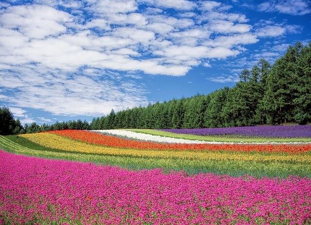 天国のようなお花畑