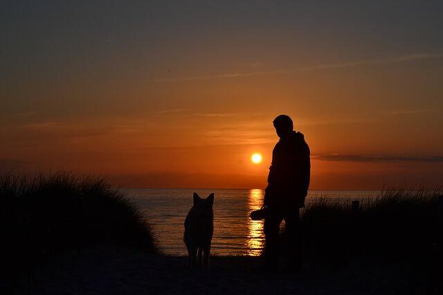 夕焼けを見ている犬と飼い主