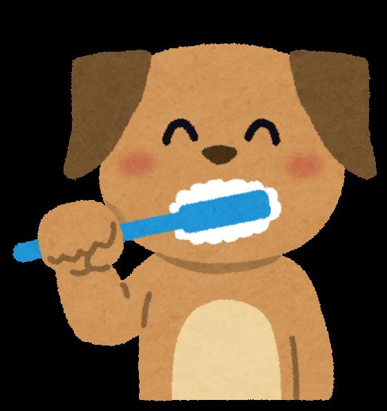 犬が歯を磨いているところ