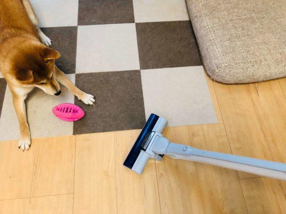 掃除機を警戒する柴犬