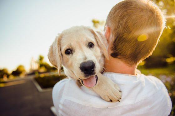 飼い主に抱えられてうれしそうな犬