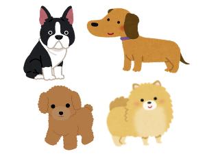 クッシング症候群になりやすい犬種