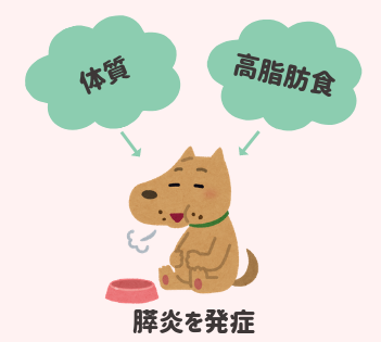 膵炎を発症しやすい犬の特徴